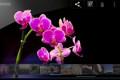 Google u sredu predstavlja svoj tablet Nexus 7