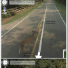Google StreetView ubio Bambi [foto]