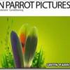 Google kupio Green Parrot Pictures kako bi poboljšao kvalitet YouTube videa