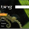 Microsoft do sada na Bing tražilici izgubio 5,5 milijardi dolara